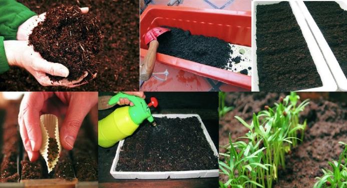 Tiêu chí chọn mua đất trồng cây