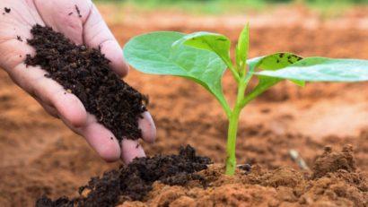 Top 10 địa chỉ mua đất trồng cây
