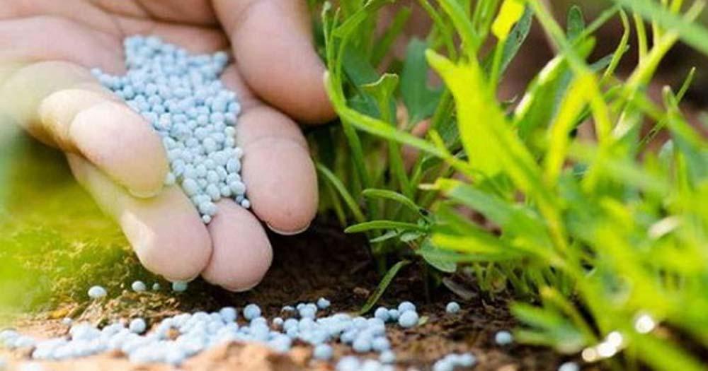 Chú ý bổ sung dinh dưỡng cho cây